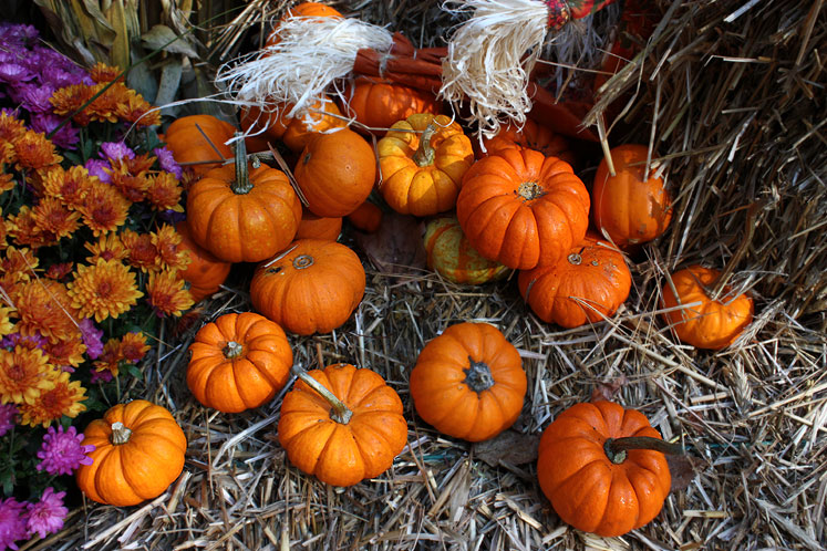 Canada Ontario Photos :: Fall :: Muskoka - pumpkins