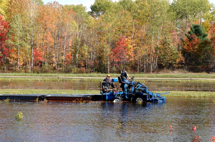 Canada Ontario Photos :: Fall :: Picking cranberries at Johnston´s Cranberry Marsh Bala