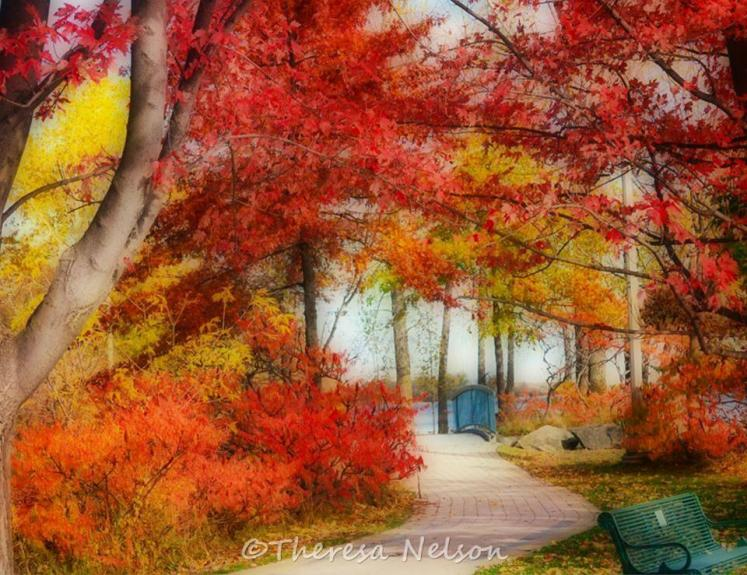 Canada Ontario Photos :: Theresa-Nelson :: Beautiful colours of fall in Belleville
