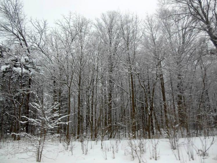 Canada Ontario Photos :: THERESA :: Winter Forest