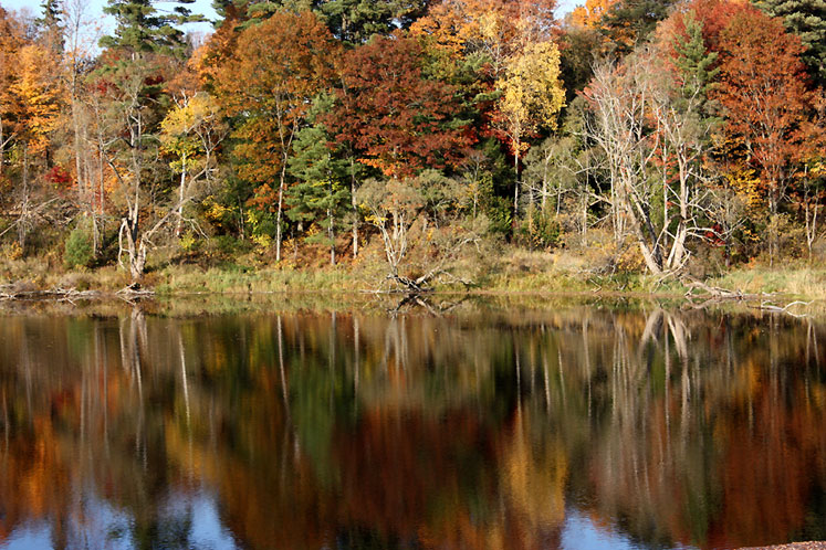 Canada Ontario Photos :: Bracebridge :: Ontario, Bracebridge - reflection
