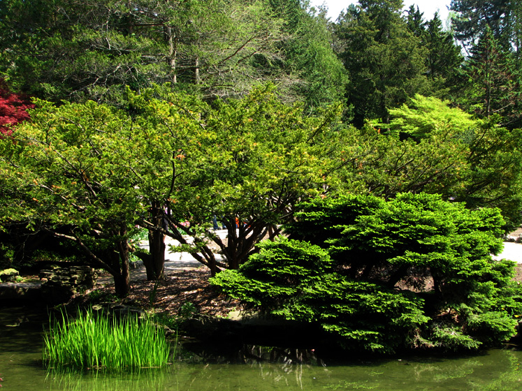 Canada Ontario Photos :: Alec :: Royal Botanical Gardens - bright green of spring