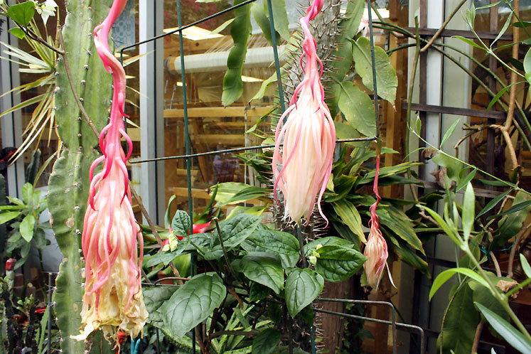 Canada Ontario Photos :: Burlington :: Burlington Art Centre - exotic flowers