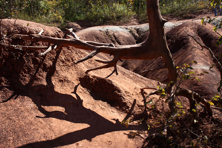 Canada Ontario Photos :: Caledon - Cheltenham Badlands :: Tree roots growing at Caledon Badlands