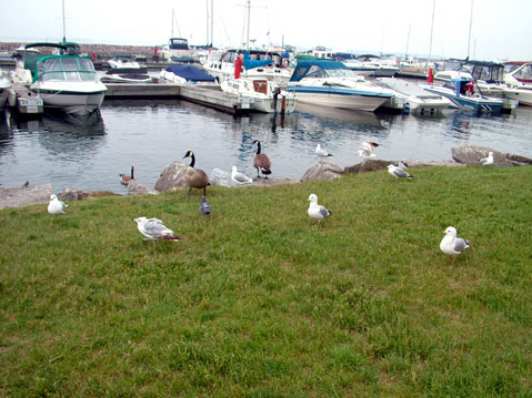 Canada Ontario Photos :: Gananoque :: Gananoque. Marina and Birds