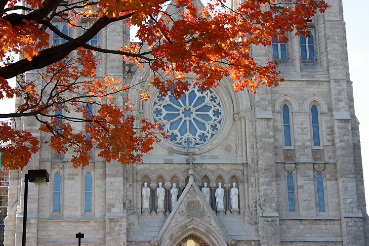 Canada Ontario Photos :: Guelph :: Guelph. The Church of Our Lady Immaculate through the leaves