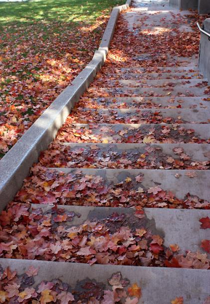 Canada Ontario Photos :: Guelph :: Guelph. A carpet of red maple leaves