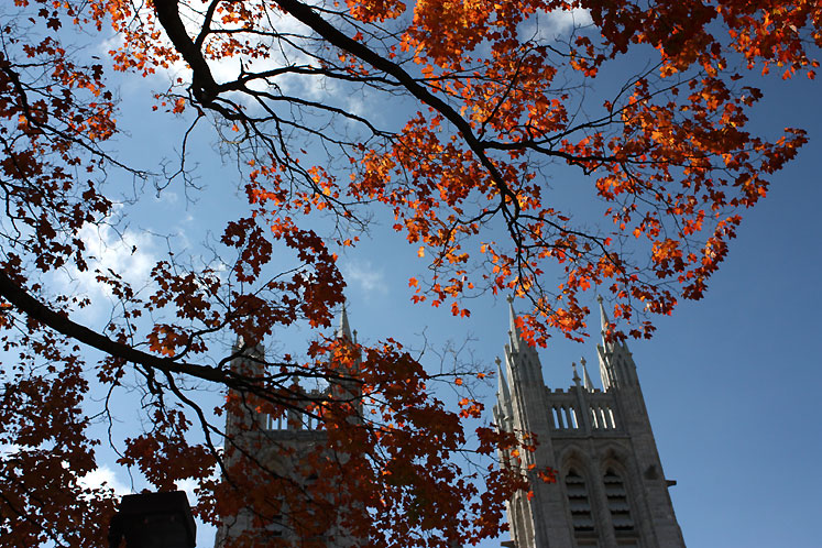 Canada Ontario Photos :: Guelph :: Guelph. A top of the Church of Our Lady Immaculate and a maple tree