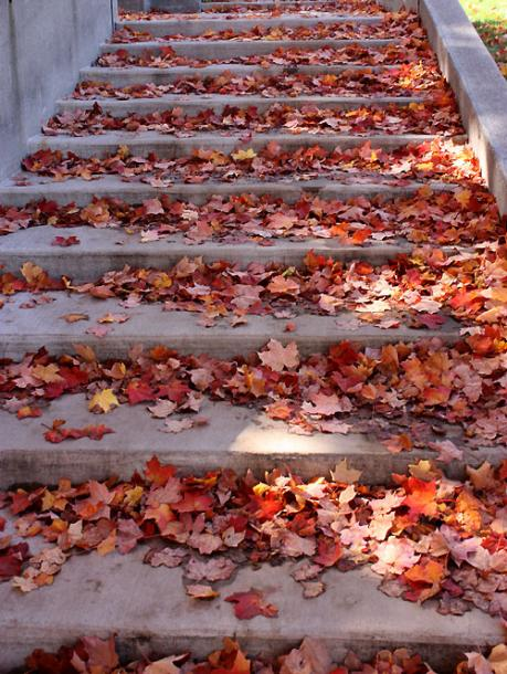 Canada Ontario Photos :: Guelph :: Guelph. Stairs covered with fallen leaves