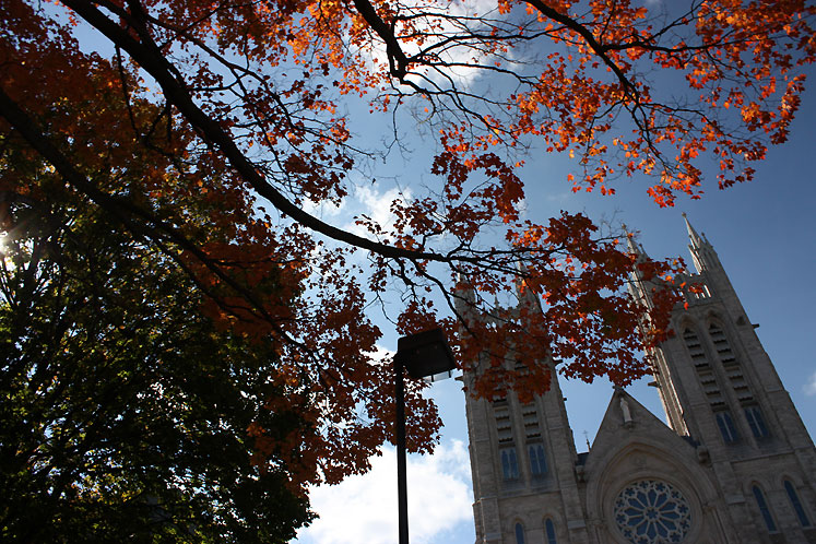Canada Ontario Photos :: Guelph :: Guelph. Tall maple tree growing in the yard of the Church of Our Lady Immaculate
