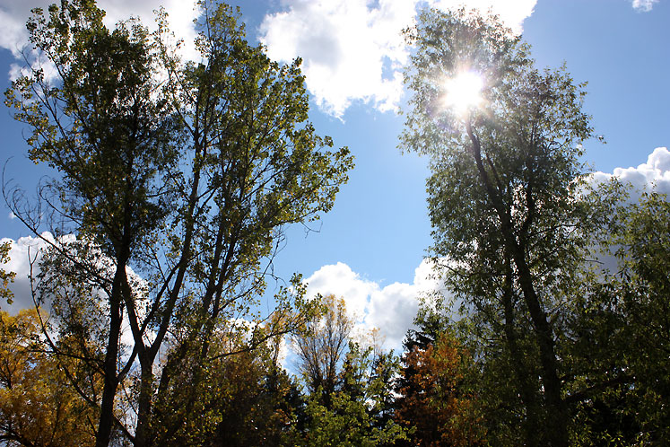Canada Ontario Photos :: Guelph :: Guelph - sunbeams though the trees