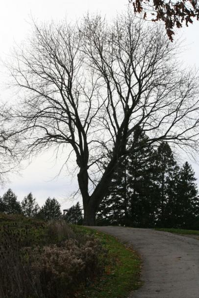 Canada Ontario Photos :: WBignell :: Bare Tree