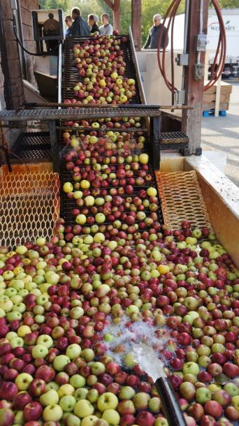 Canada Ontario Photos :: Misc :: Apple Cider Mill Tour at Wellesley Apple and Cheese Festival