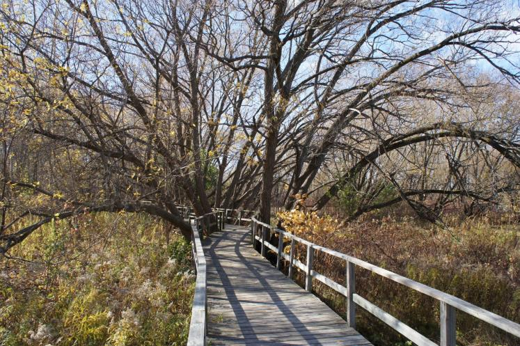 Canada Ontario Photos :: Nature :: Boardwalk Trail in fall Collingwood
