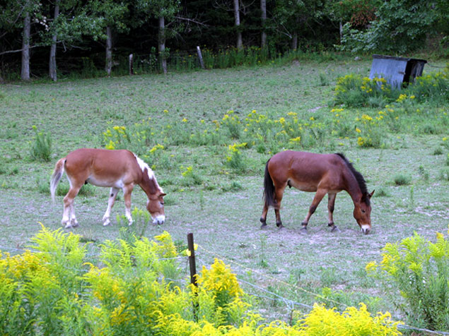 World Travel Photos :: Countryside :: Ontario Countryside. Horses