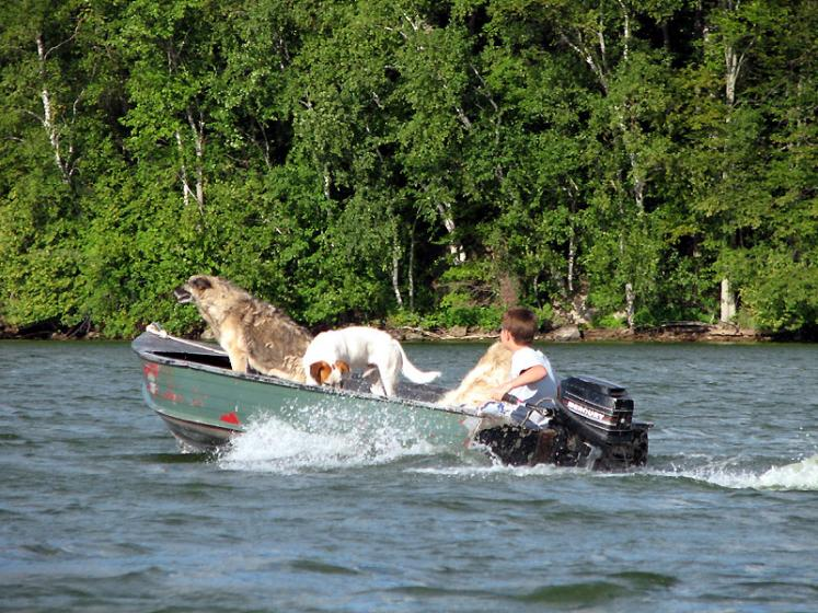 Canada Ontario Photos :: Cranberry Lake :: Ontario. Dogs having fun on Cranberry Lake