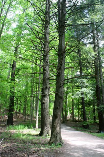 Canada Ontario Photos :: Misc :: Dundas Valley Trail near Hamilton