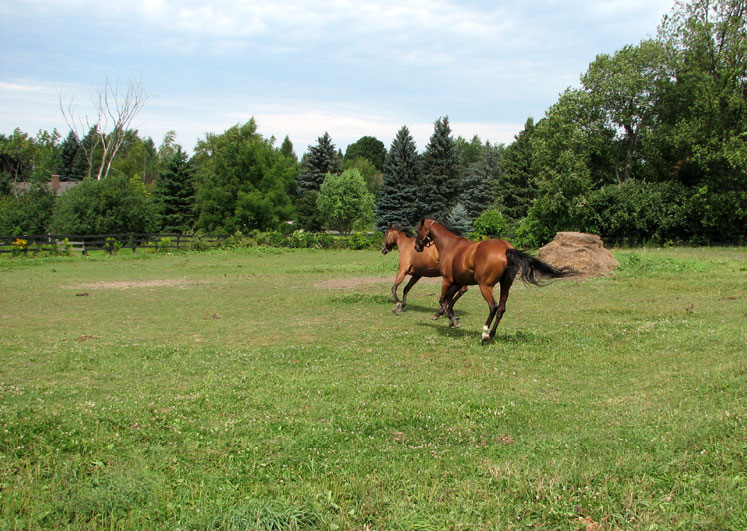 Canada Ontario Photos :: Alec :: Galloping Horses