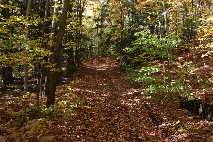 Canada Ontario Photos :: Nature :: Muskoka. A path through the forest