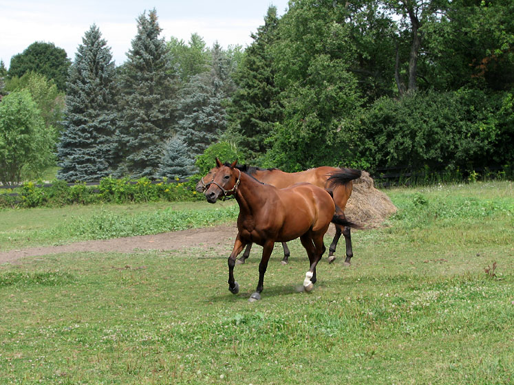 World Travel Photos :: Countryside :: Ontario. Running horses