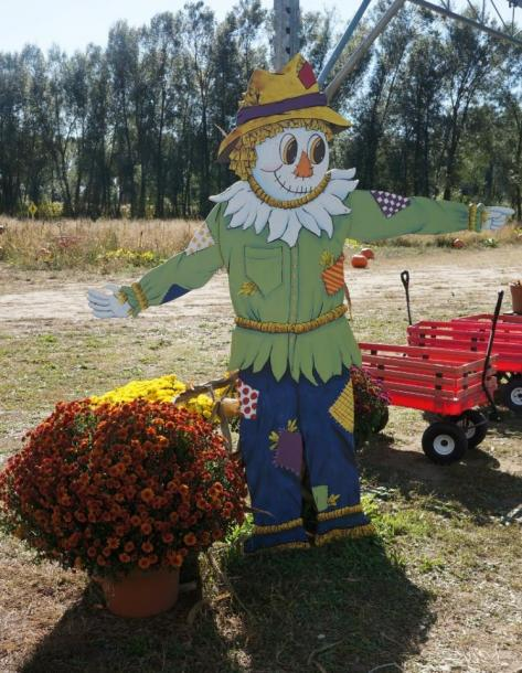 Canada Ontario Photos :: Misc :: Snyders Family Pumpkin Farm in Bright