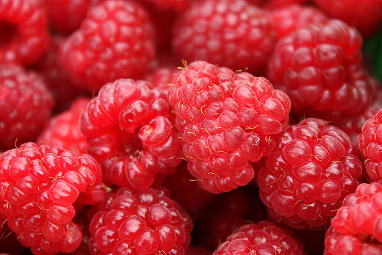 World Travel Photos :: Colors - Rouge :: Ontario farm - a close up of red raspberries