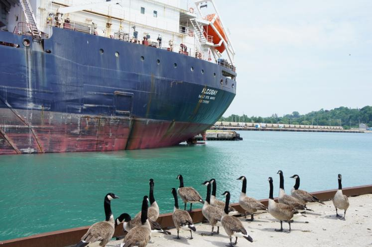 Canada Ontario Photos :: Goderich :: Geese checking out lake freighter in Goderich Harbour