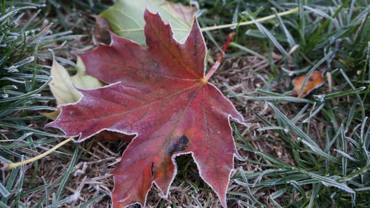Canada Ontario Photos :: New Hamburg :: Early morning frost on fall leaf New Hamburg