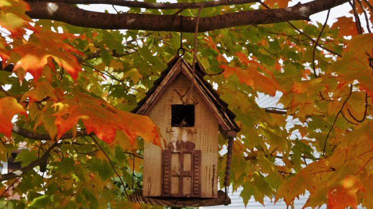 new hamburg fall leaves birds house ontario photos a touch of fall home tour house of hawthornes