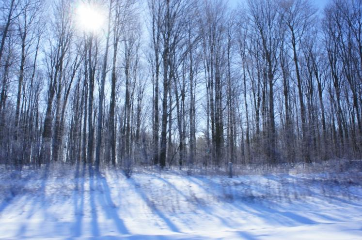 Canada Ontario Photos :: New Hamburg :: Sunshine shining threw trees near New Hamburg