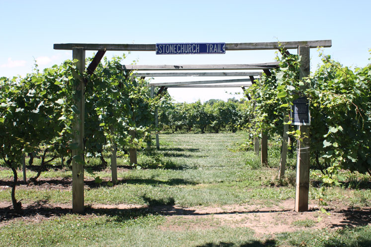 Canada Ontario Photos :: Niagara-on-the-Lake :: Niagara-on-the-Lake - Stonechurch winery walking trail