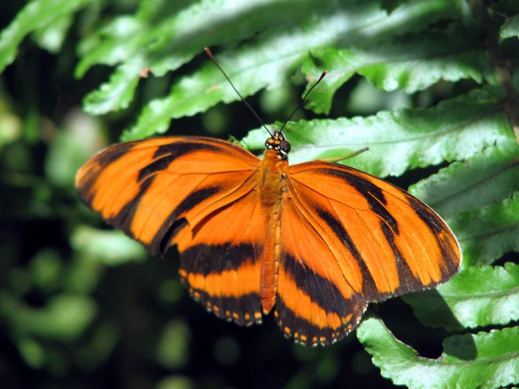Canada Ontario Photos :: Butterfly Observatory :: Butterfly Conservatory at Niagara Falls