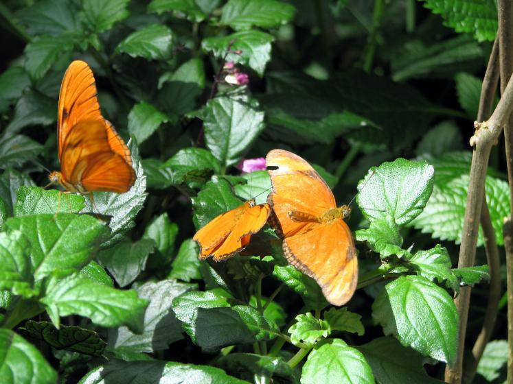 Canada Ontario Photos :: Butterfly Observatory :: Butterfly Observatory at Niagara Falls