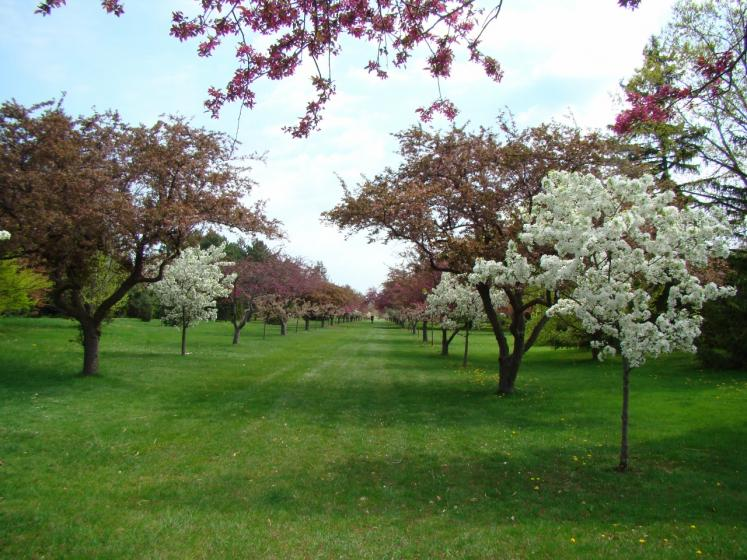 Canada Ontario Photos :: Niagara Falls :: Crab Apple Trees at Niagara Botancial Gardens