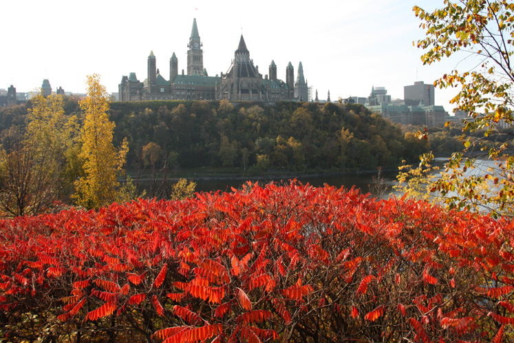 Canada Ontario Photos :: Ottawa :: Ottawa. Red bushes and Parliament Hill