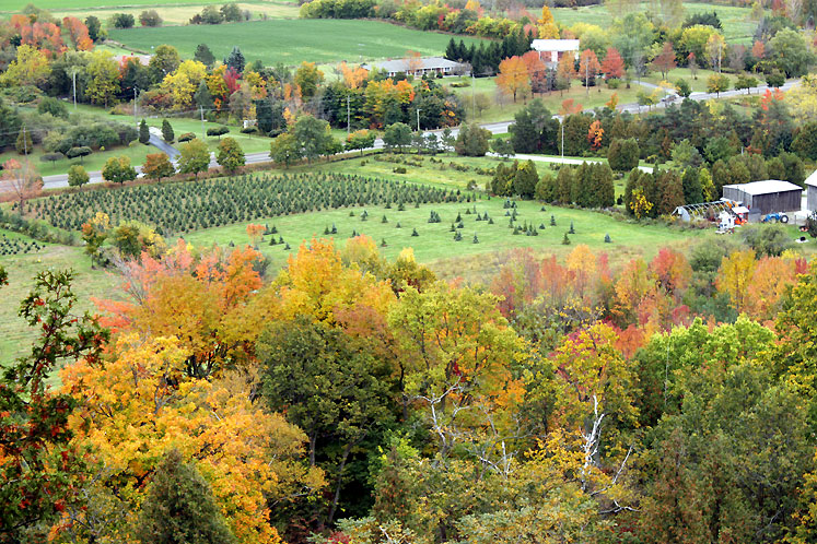 Canada Ontario Photos :: Rattlesnake Point :: Rattlesnake Point - a view on a tree farm