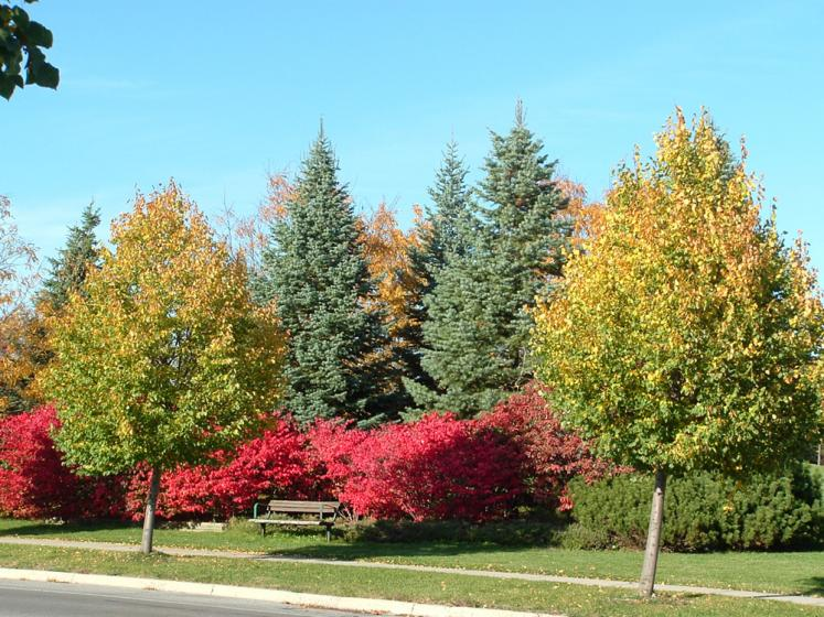 Canada Ontario Photos :: Valy :: Richmond Hill. Fall