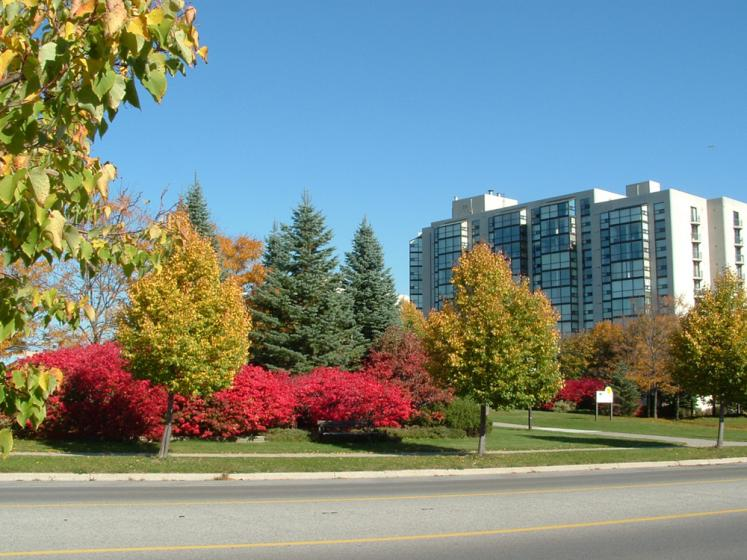 Canada Ontario Photos :: Valy :: Ontario. Richmond Hill. Fall colors
