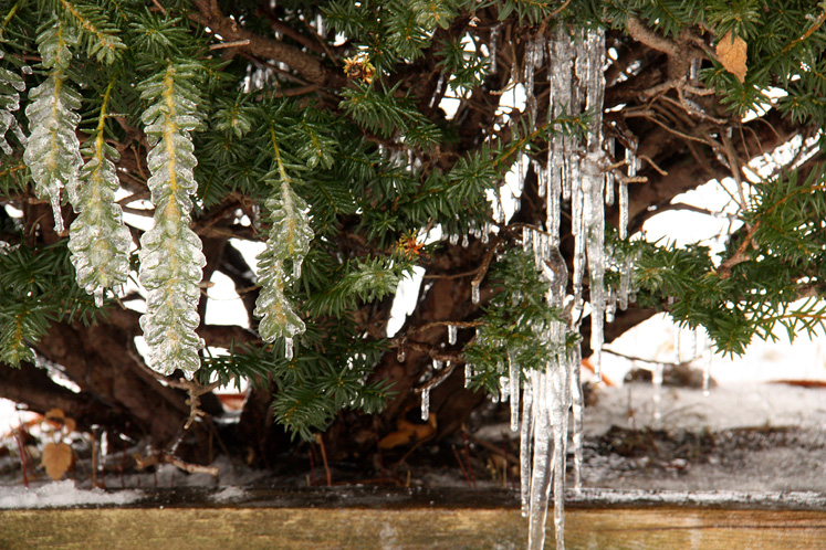 Canada Ontario Photos :: Richmond Hill :: Ice storm in Richmond Hill