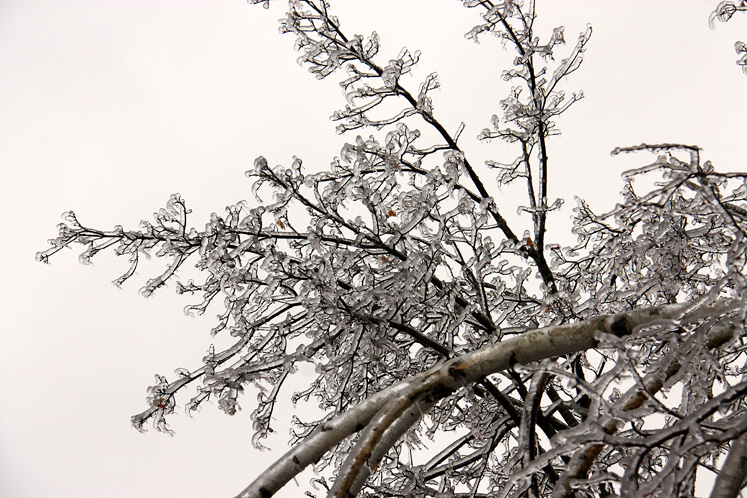 Canada Ontario Photos :: Winter :: Ice storm in Richmond Hill - a tree covered with ice