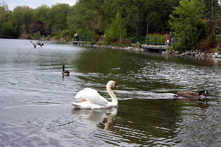 Canada Ontario Photos :: Richmond Hill :: Richmond Hill. Mill Pond