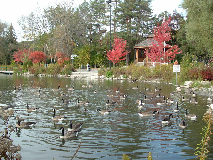 Canada Ontario Photos :: Fall :: Richmond Hill . Mill Pond  - Fall