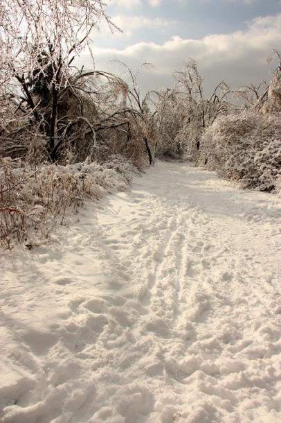 World Travel Photos :: Winter  :: Richmond Hill. A path in a park