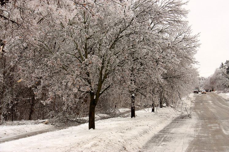 Canada Ontario Photos :: Richmond Hill :: Richmond Hill. A street after the ice storm