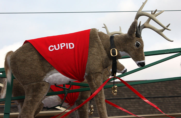 World Travel Photos :: Christmas :: Richmond Hill. Santa´s raindeers- Cupid
