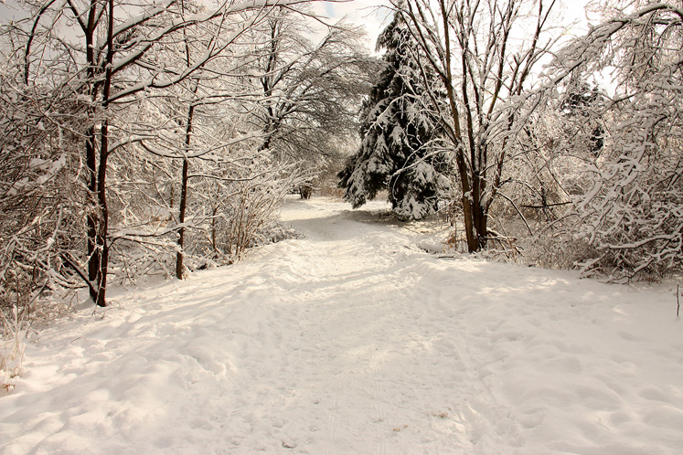 World Travel Photos :: Winter  :: Richmond Hill - a walking path in the park