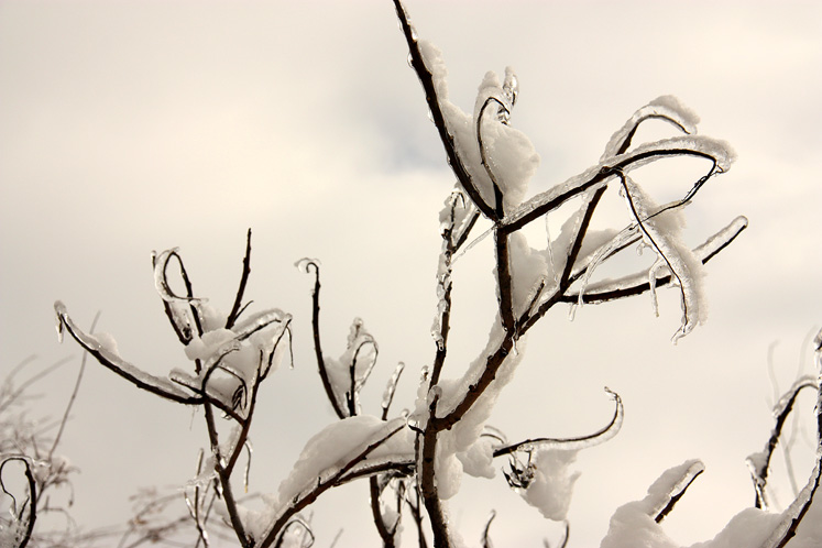 Canada Ontario Photos :: Winter :: Richmond Hill - ice and snow covered branches