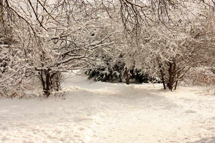 Canada Ontario Photos :: Winter :: Winter wonderland in a park in Richmond Hill