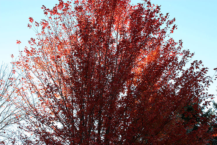 Canada Ontario Photos :: Alec :: Richmond Hill. Fall - red and blue