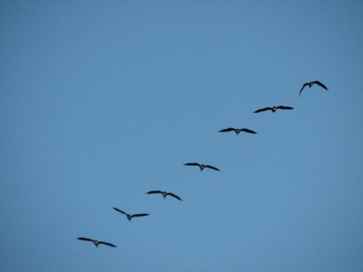 Canada Ontario Photos :: St. Jacobs :: St.Jacobs. Birds are going South